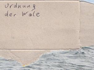 Ordnung der Wale
